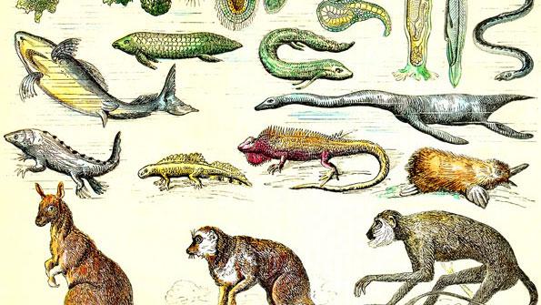 Charles Darwin and shifting paradigms in science