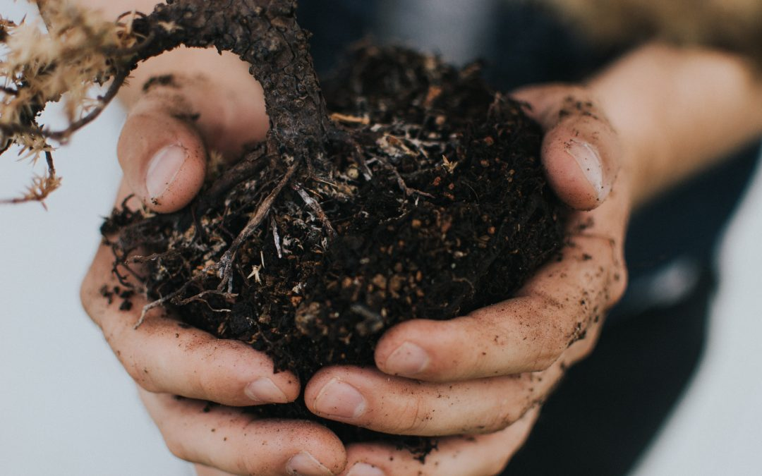 What on earth is earth? A soil scientist tell us…and why we shouldn't treat it like dirt.
