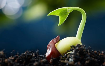 Planting the seeds of local agriculture