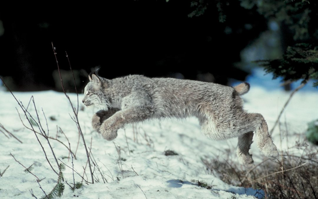 Killing contests and death traps: moving to protect NM Wildlife