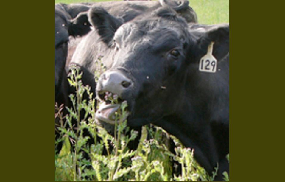 On Pasture Magazine: bringing science to the farm
