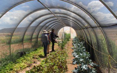 Indigenizing the local food movement