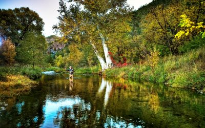Deciding the fate of the Gila, New Mexico's last free-flowing river