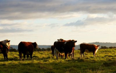 Richard Teague: the Science of Holistic Grazing