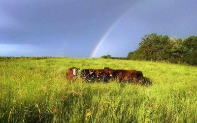 Health, profit, and beauty on the farm in Minnesota