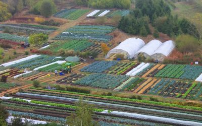 Growing vegetables for fun and massive profit … really?