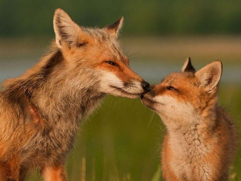 Does Wildlife Services serve wildlife?