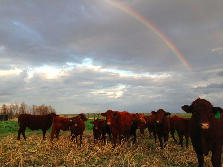 Restoring Texas prairie land: From big ag to a prosperous family farm