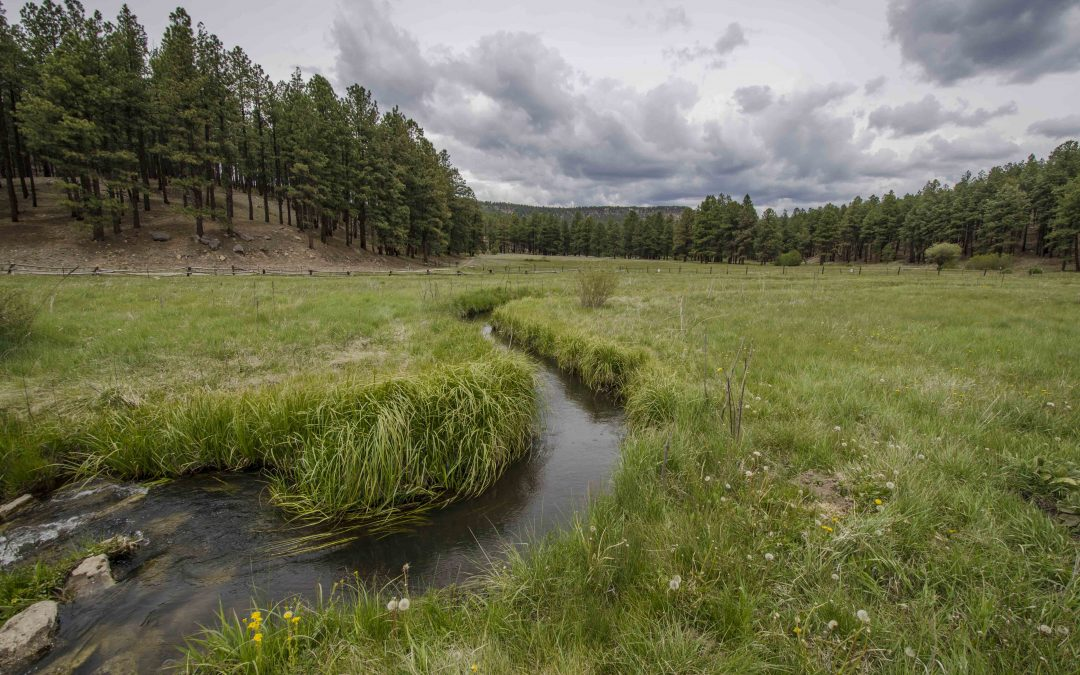 A new threat to New Mexico's water