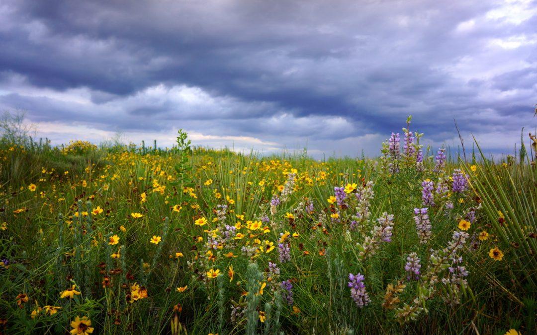 Restoring public lands through grazing