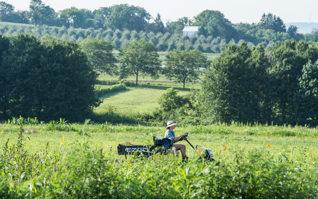 The Rodale Institute: Pioneers in regenerative/organic farming