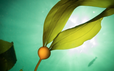Regenerative production of…seaweed