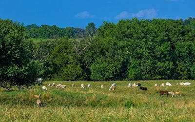 Into the Pasture: Grassfed Goes Mainstream