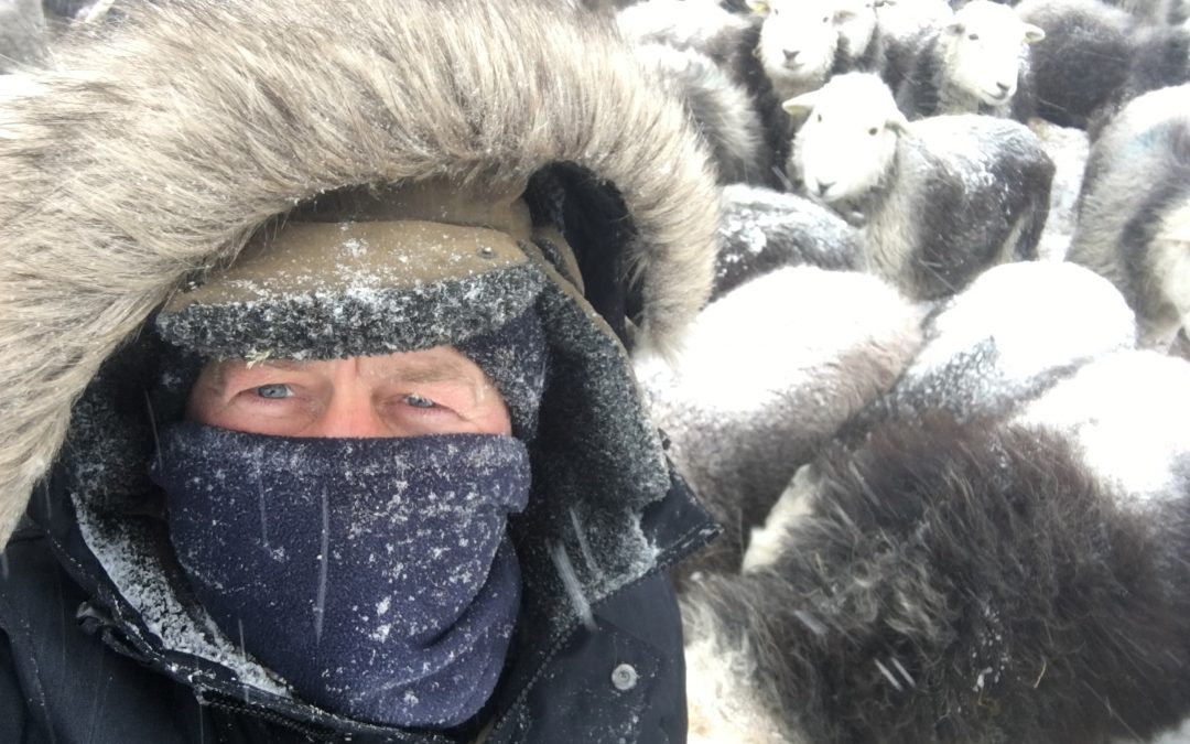 Stepping back from the abyss: James Rebanks' return from industrial to traditional farming